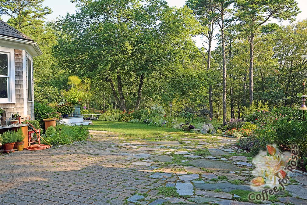 We added onto that patio so that the paving goes to the fragrance garden (to the right of this photo) and to the steps down to the lake. OK, OK...I know it needs weeding. That's on my to-do list for this evening when the area is shady.