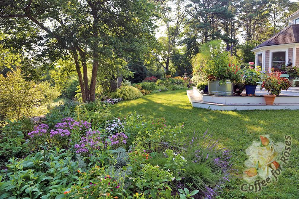 A wider angle view that shows this same area. We enlarged what was a very narrow bed along the edge of the lawn so that it now encircles the deck.