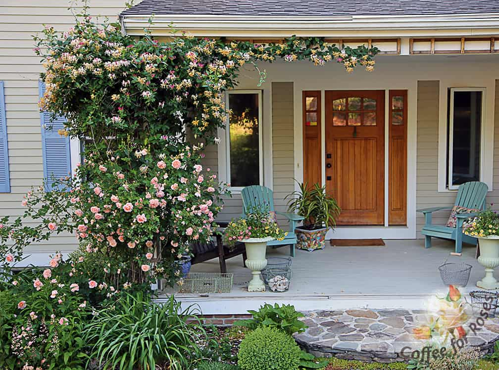 Two Of My All Time Favorite Plants In Combination: Colette Climbing Rose  And Lonicera Periclymenum Good Looking