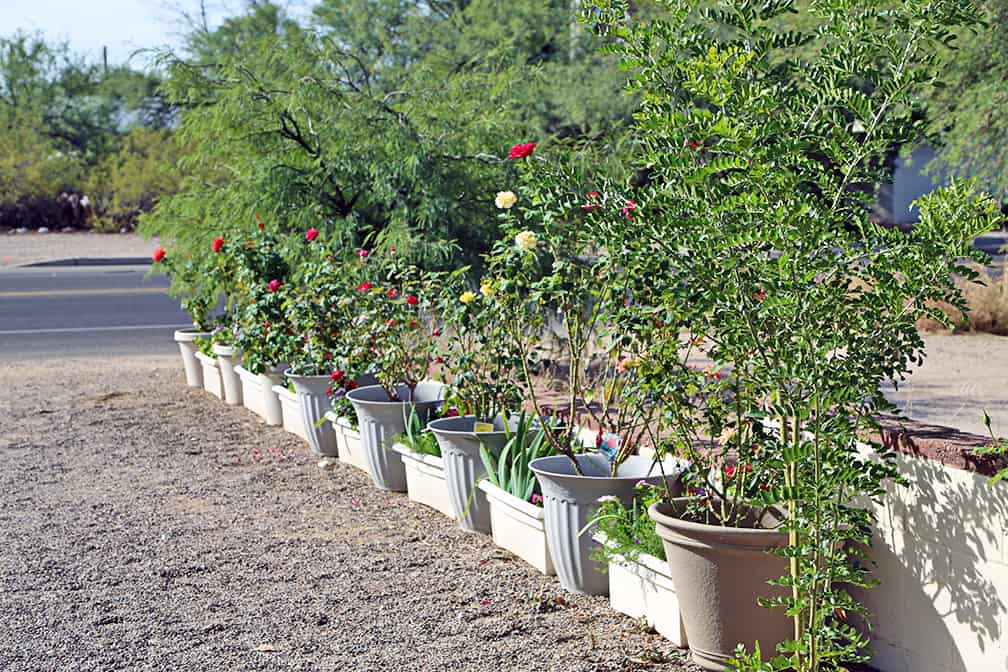 Marking boundaries with a container garden.