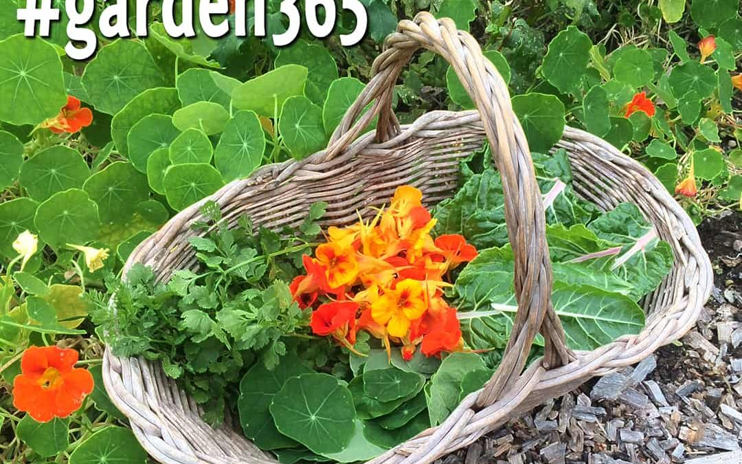 Gardening: It's Not Just For Spring Anymore
