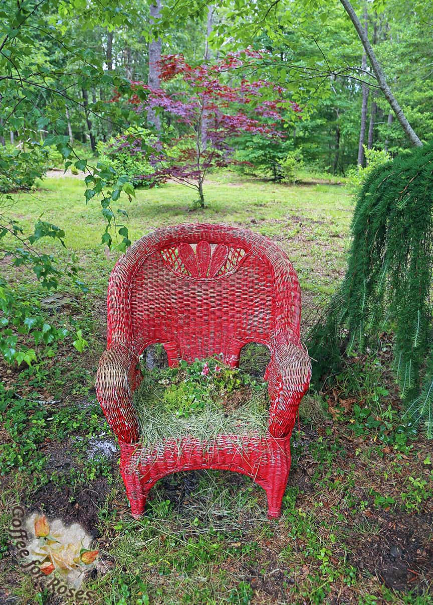 Planting an Old Wicker Chair