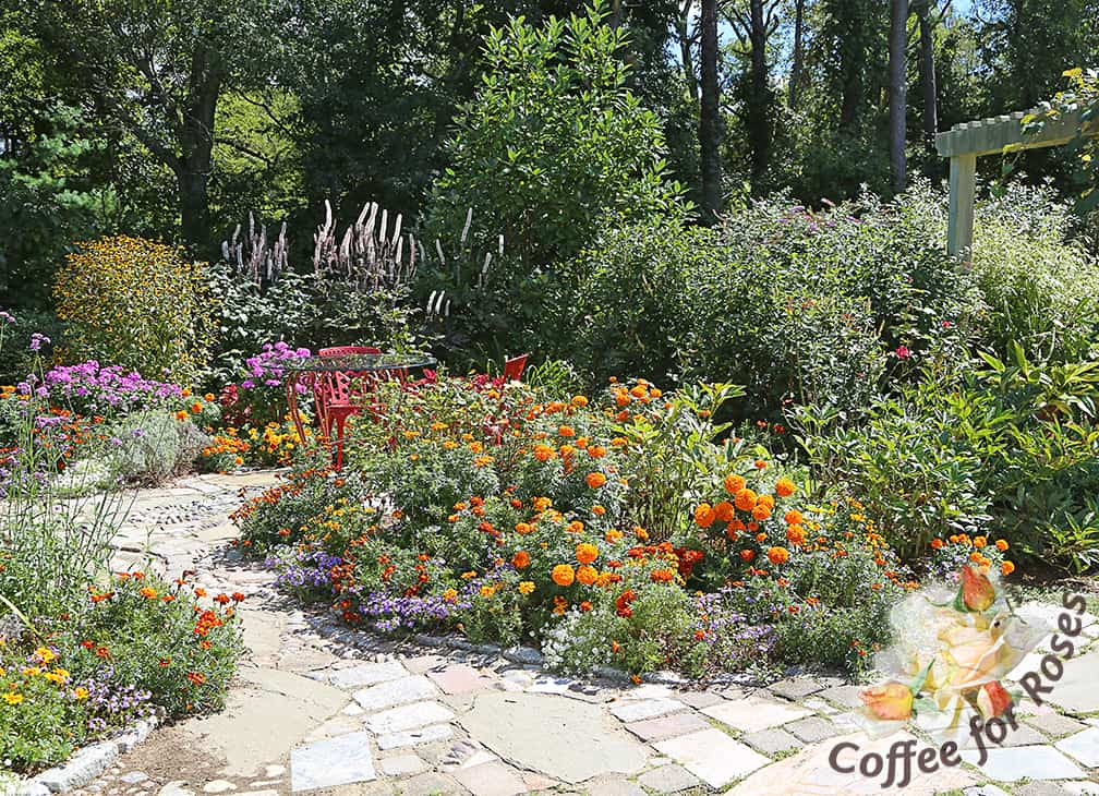 This garden was planted with a mix of marigolds that I grew from seed and together with other annuals and perennials, it made this garden look like a Mexican fiesta all summer long. Party time!