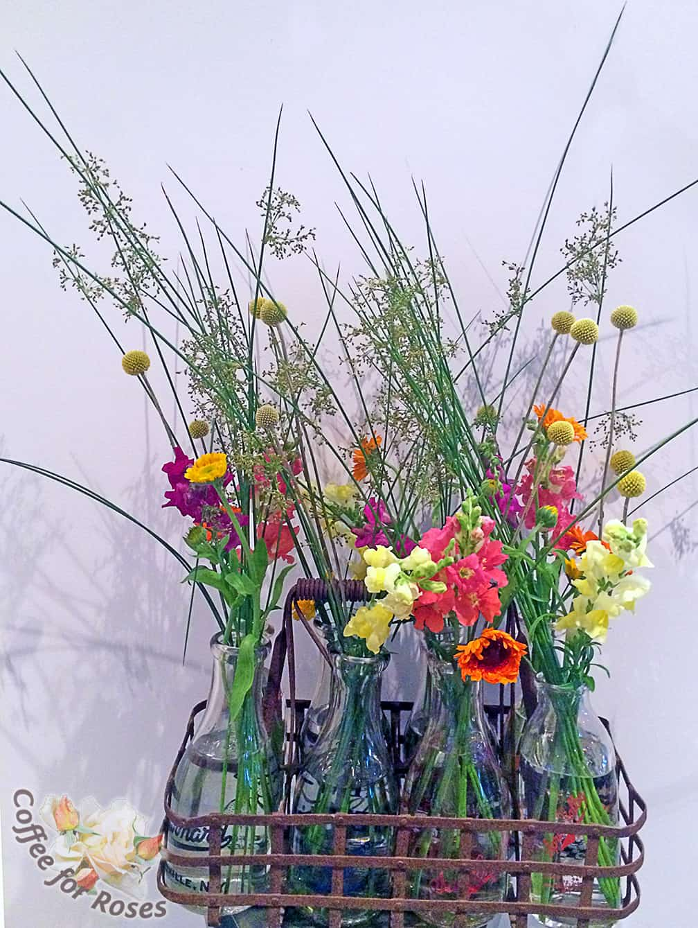 I put together a few arrangements before the wedding day too. I love how the rush (Juncus) looks in this milk-bottle display.