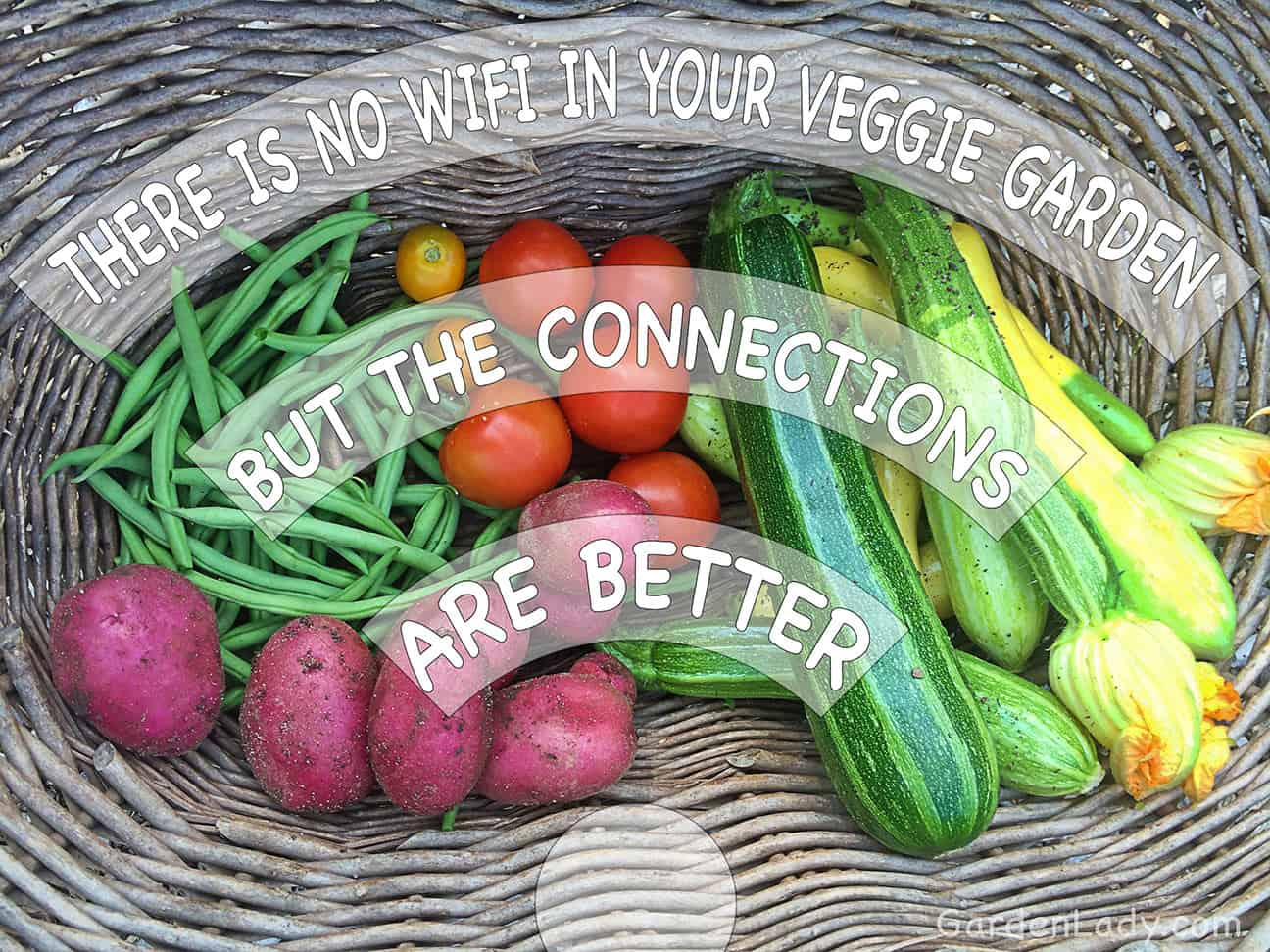 Better Connections Through Vegetable Gardening