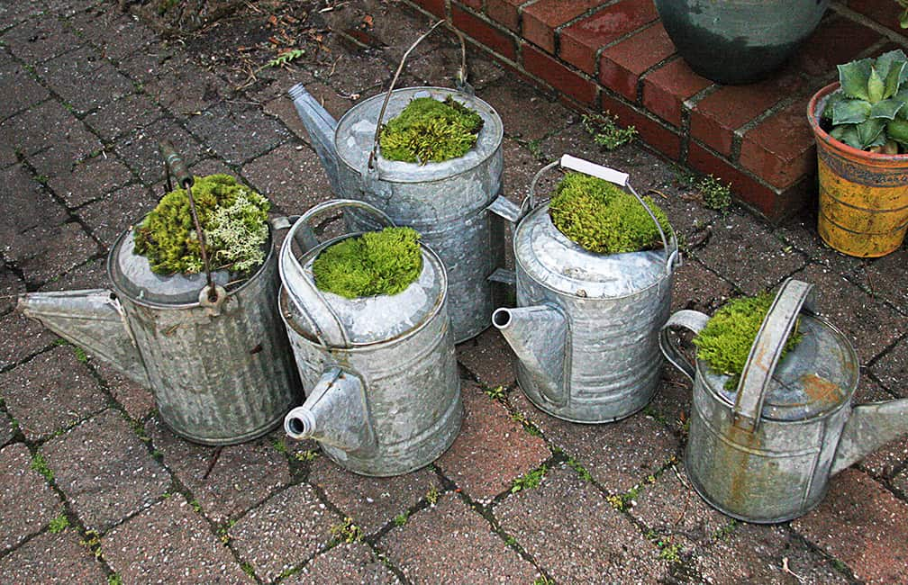 What to do With Old Galvanized Watering Cans