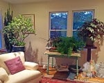 The front room faces south so it's a prime space for over-wintering plants and houseplants.