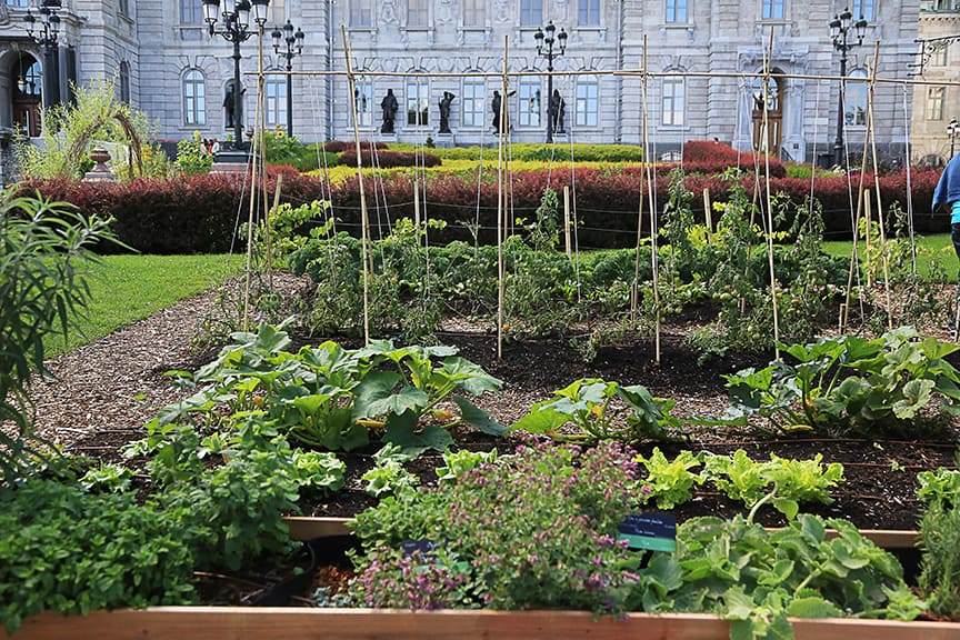 Some of the vegetables were placed in the ground, and others grown in raised beds or Smart Pots.
