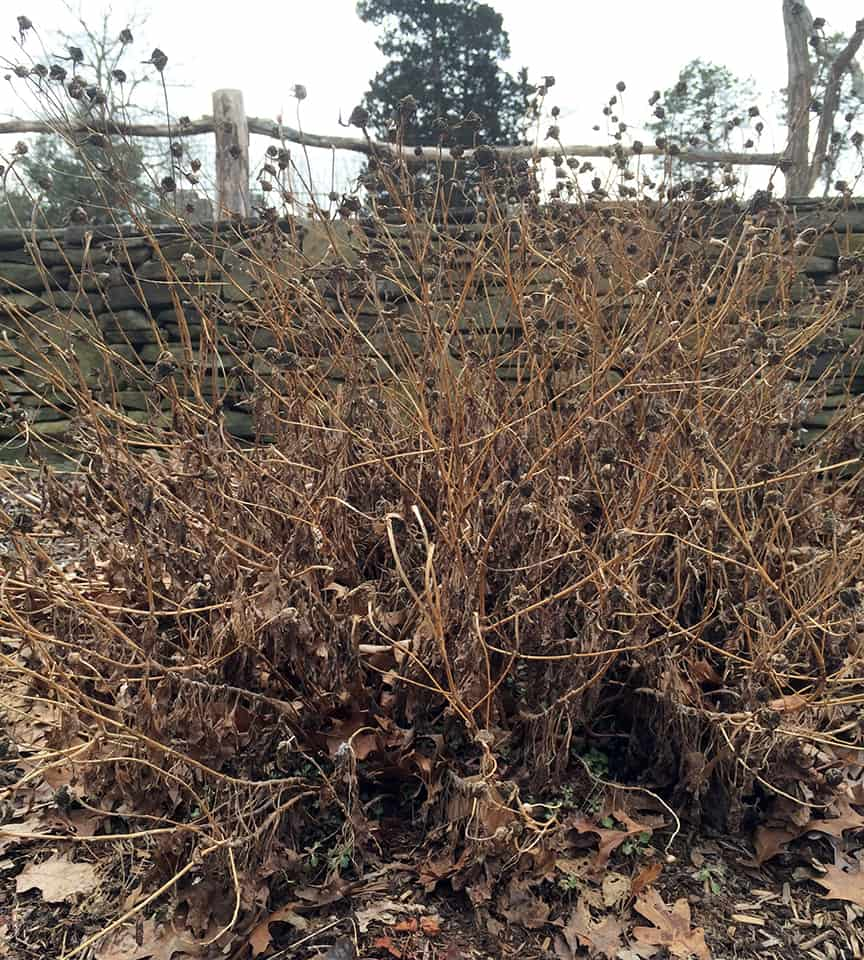 Contemporary Weather In Winter Garden Component - Brown Nature ...