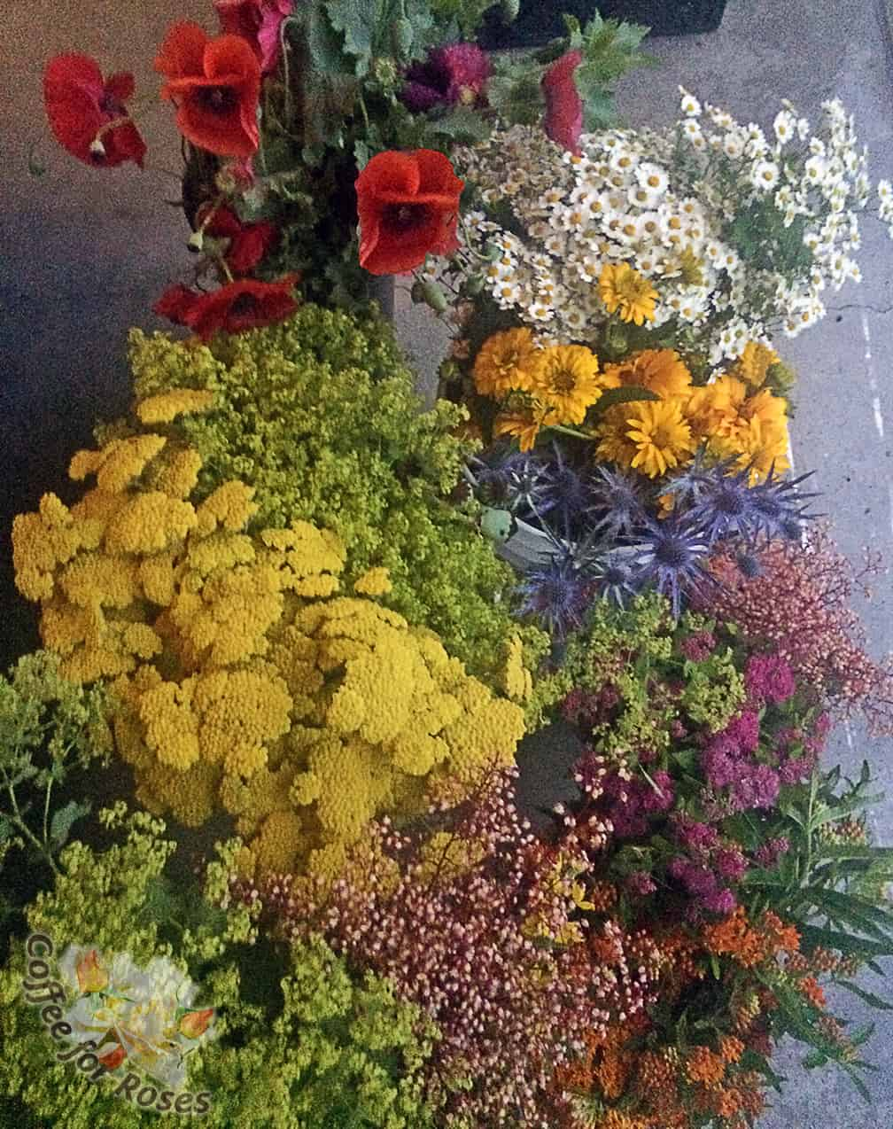 Here are some of the flowers I picked from my gardens, top to bottom: corn poppies, feverfew, heliopsis, lady's mantle, yarrow, blue sea holly, heuchera, spirea, and butterfly weed.