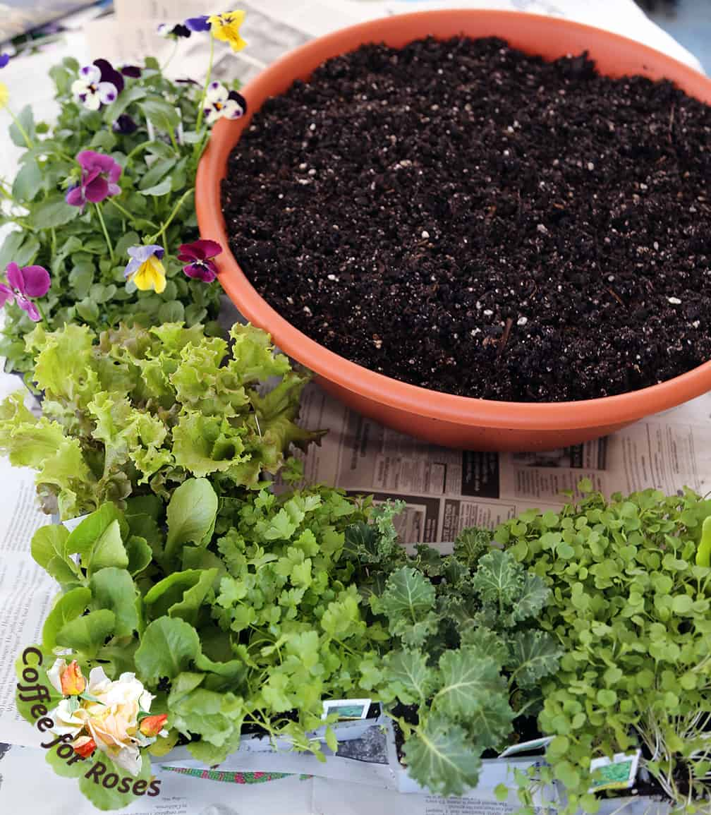 Get the potting soil wet before you fill the bowl. This is an important step for success! Fill the bowl with the damp potting mix but don't press it down hard...water it in to settle the mix before planting.