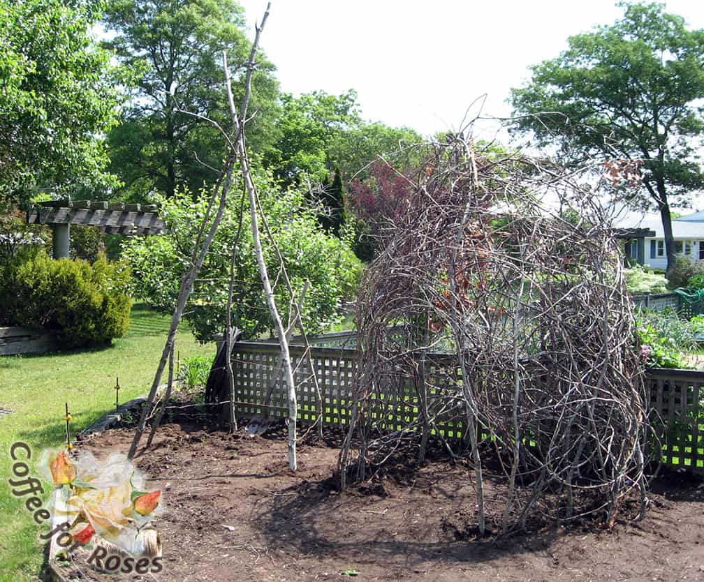 Here are two frameworks that Roberta and I made one summer at the Master Gardener Demonstration Garden. The rounded one on the right made good use of the many large and long Smilex roots I pulled from Poison Ivy Acres that spring. They were woven in and out among the twigs and sticks.