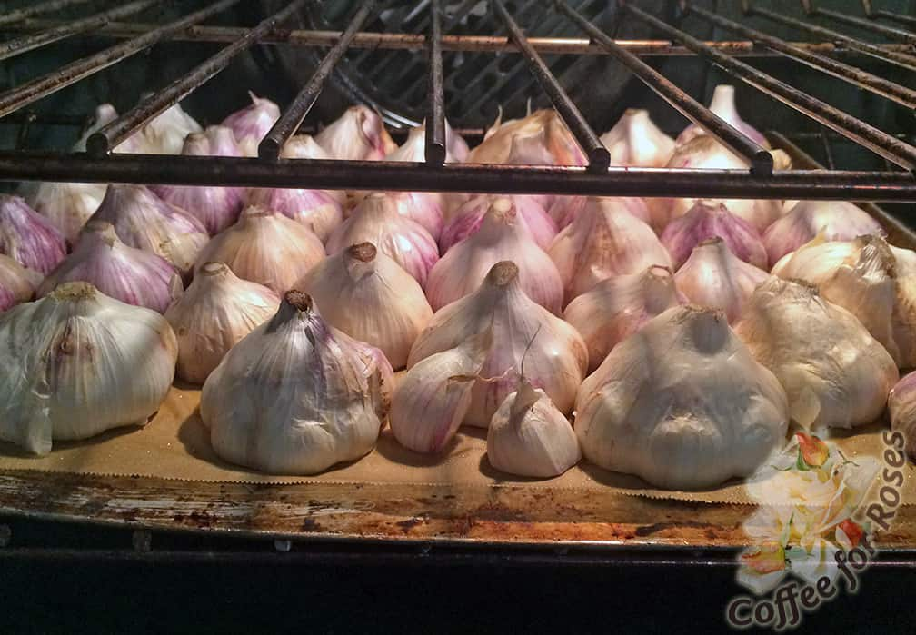 Put the garlic on a sheet of baking parchment that lines a cookie sheet and roast at 375 degrees.