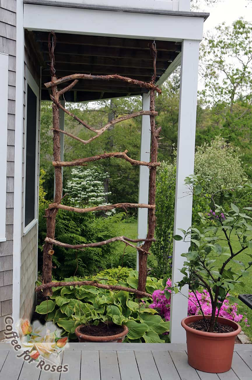 Make A Rustic Trellis For Annual Vines Coffee For Roses