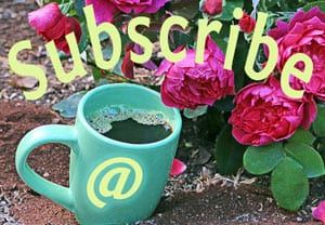 Subscribe to Coffee For Roses