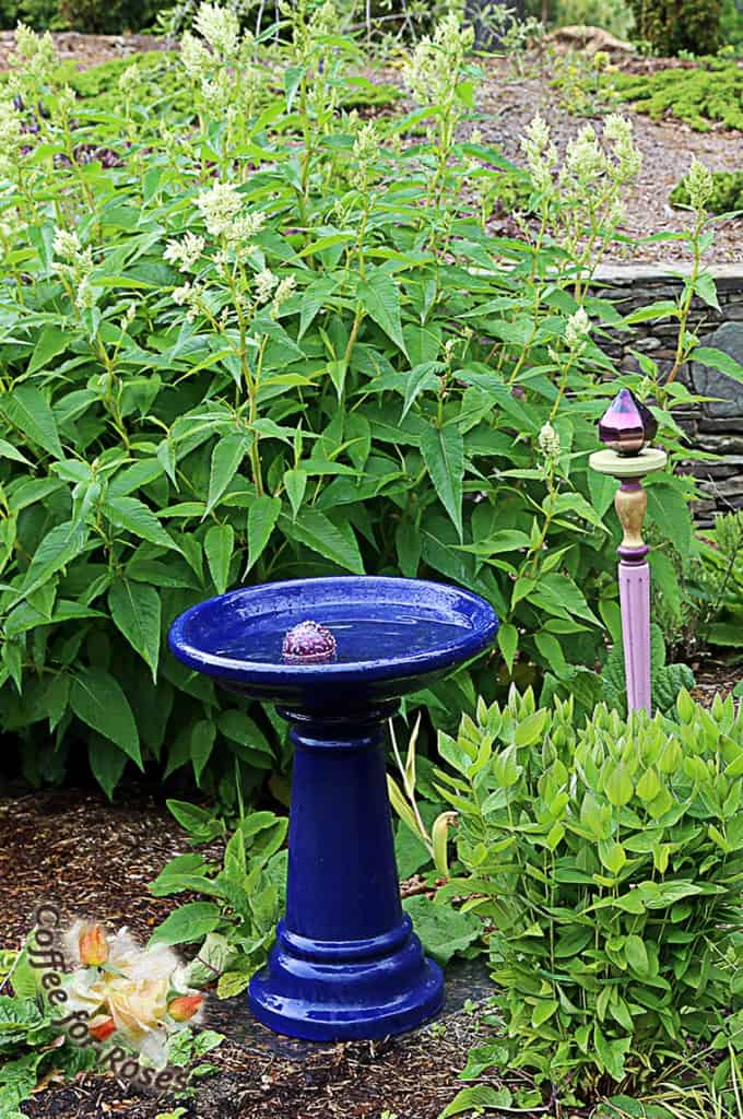 Here is a garden totem that is part ornament, part plant support. Next to the birdbath I have a Clematis integrifolia, which is a bush form of clematis. It flops open every spring before flowering, so it needs to be supported. Rather than install an invisible staking system I chose to use this totem that I bought some years ago at a flower show. It is made of a brightly colored stairway spindle, topped with a flat wooden disk and a plastic finial. You could make the same with any spindle from a home supply store - top with the unfinished wooden circles that are sold as wheels at crafts stores, and an old glass insulator or upside down small flower pot. The possibilities are endless. To use such a piece as a support, push it into the ground right next to the flopping plant and then run a cord or, as I did here, a thin piece of Velcro around the plant, tucking it under the leaves so it doesn't show much. The ornamental aspect of the totem takes the eye away from the fact that the plant is tied.