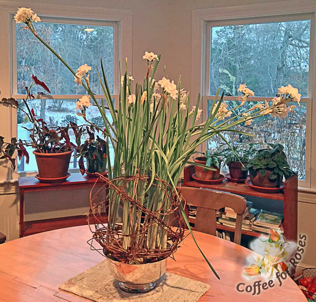 "Search on this blog for ""vine support for paperwhites"" and you'll find instructions for creating the natural flower support you see here."