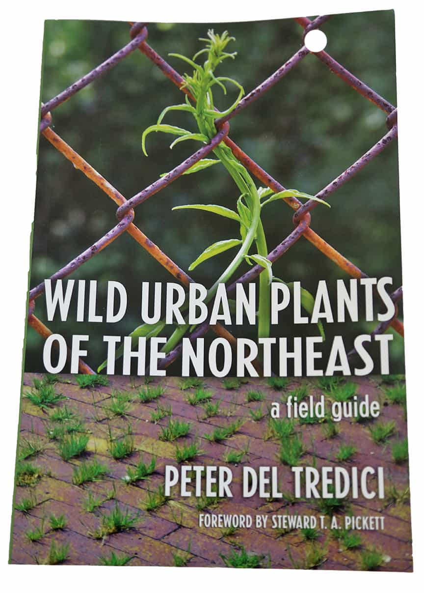 wild_urban_plants_northeast_del_tredici
