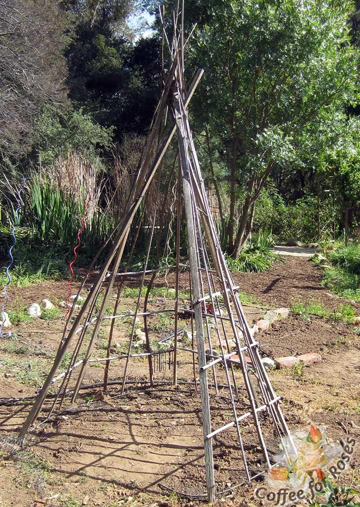 Constructing A Plant Hut or Tipi