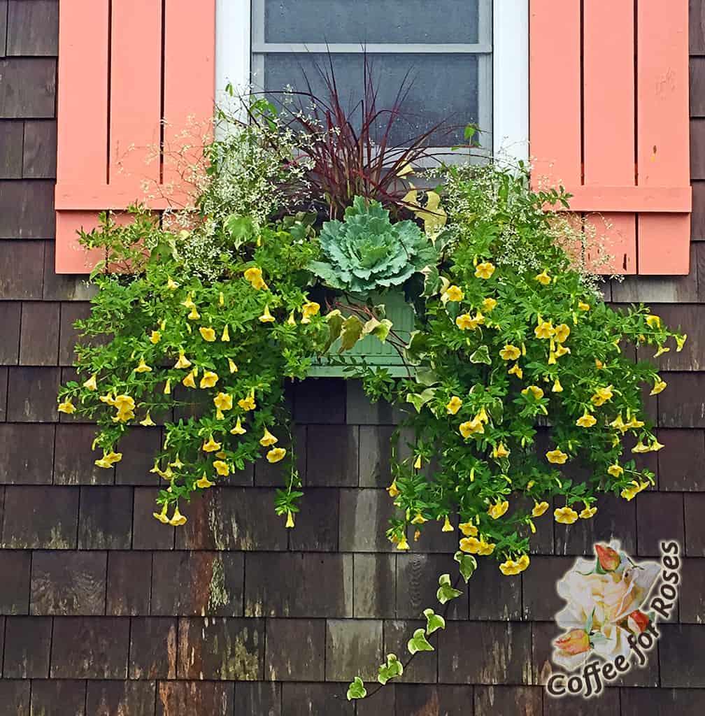 Fall Window Box Tweaking